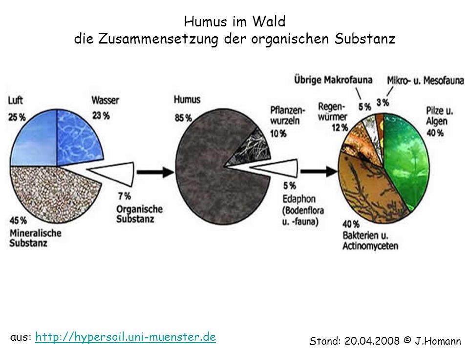 Humus im Wald die Zusammensetzung der organischen Substanz
