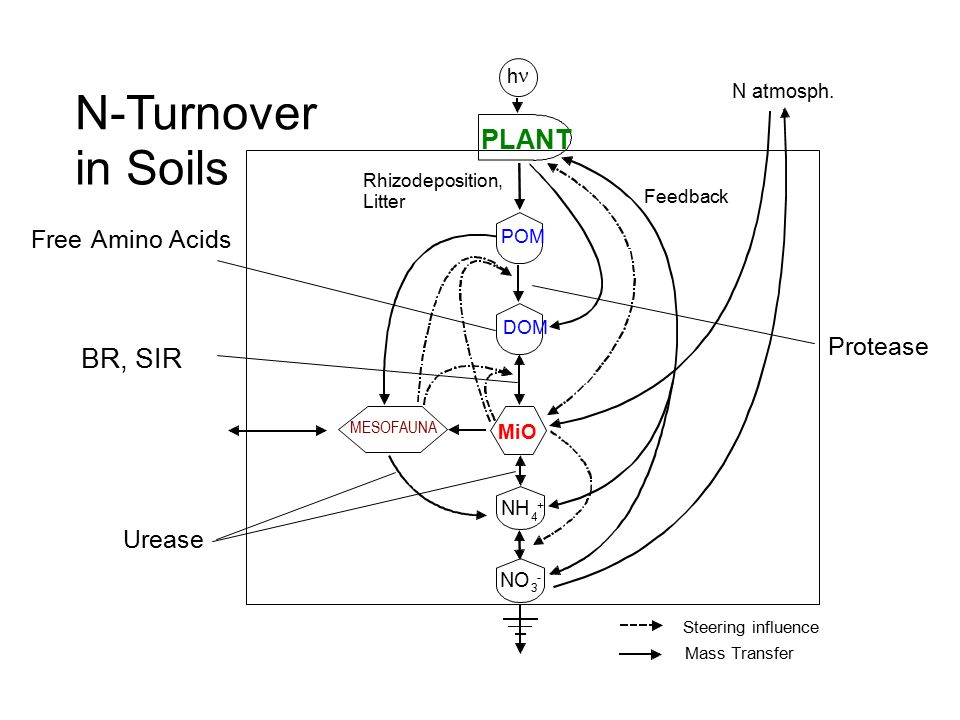 N-Turnover in Soils BR, SIR PLANT Urease Free Amino Acids Protease h n
