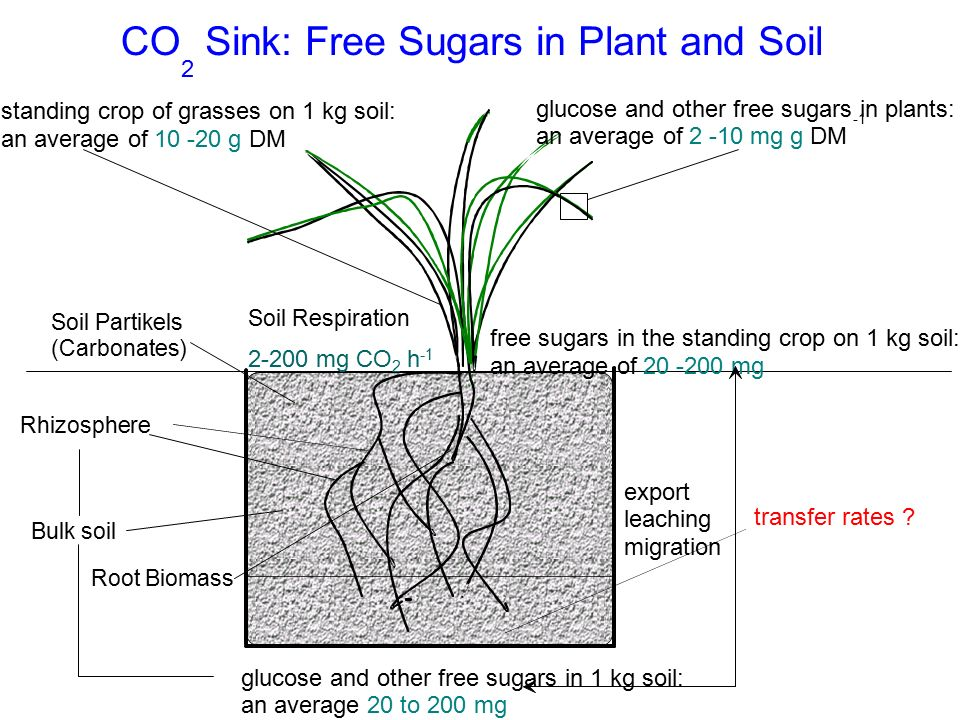 Sink: Free Sugars in Plant and Soil