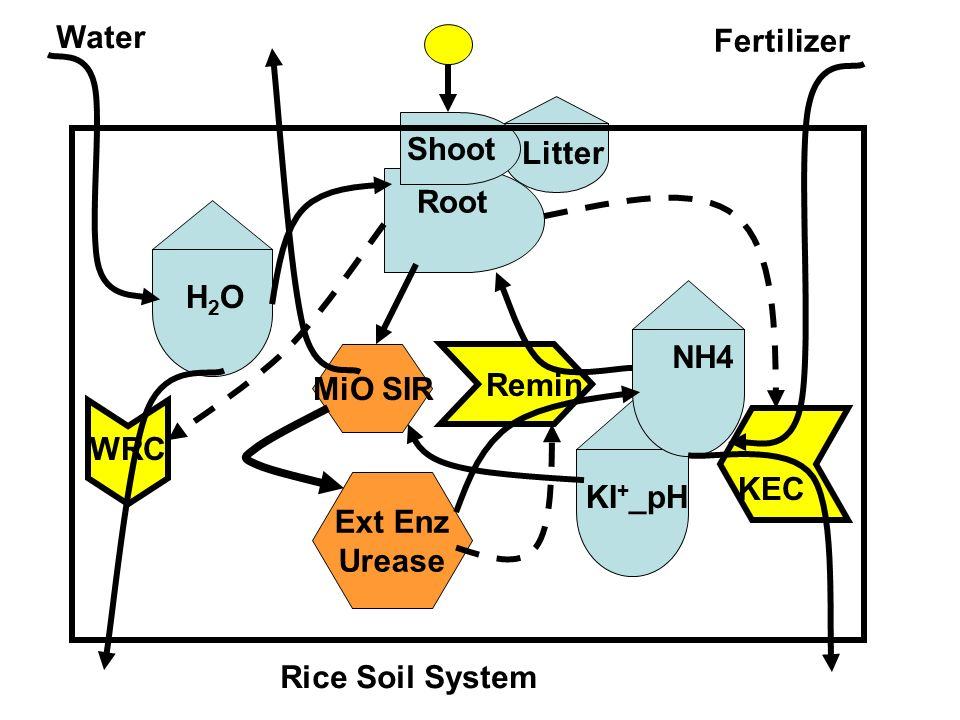 Water Fertilizer. Shoot. Litter. Root. H2O. NH4. MiO SIR. Remin. WRC. KEC. Ext Enz Urease.