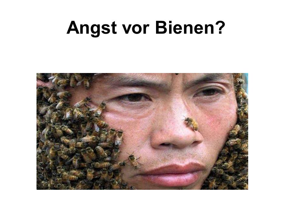 Angst vor Bienen