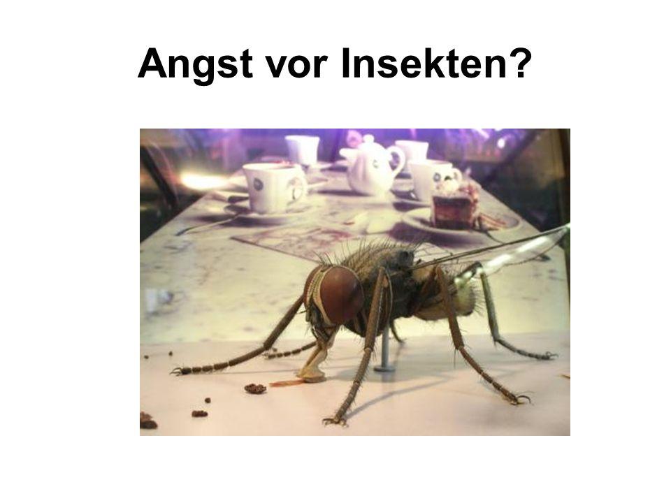 Angst vor Insekten