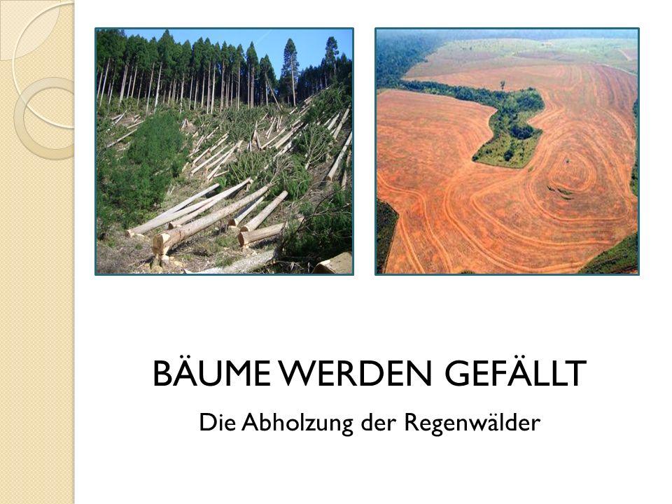 Die Abholzung der Regenwälder