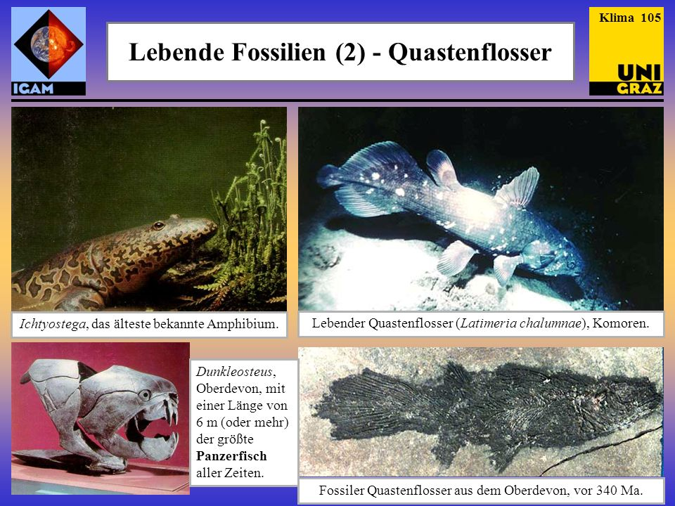 Lebende Fossilien (2) - Quastenflosser