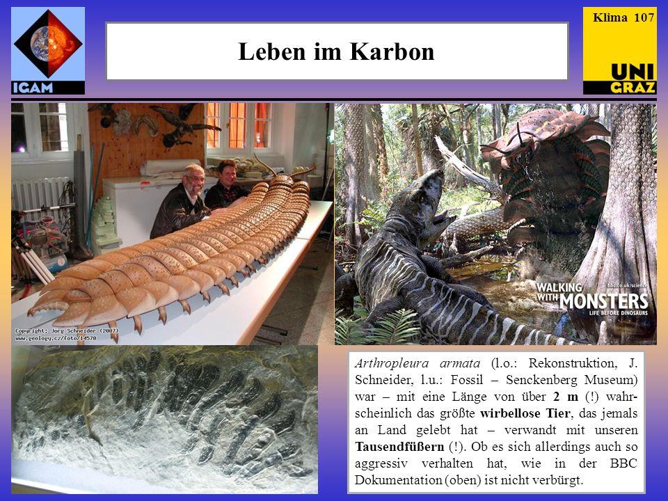 Klima 107 Leben im Karbon. Zur Ergänzung noch zwei Bilder der indonesischen Quasten-flosser, die 1999 erstmals lebend beobachtet worden sind.