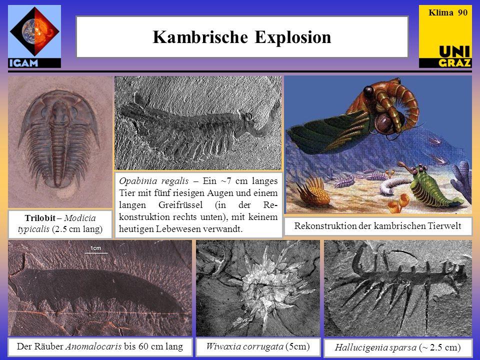 Klima 90 Kambrische Explosion.