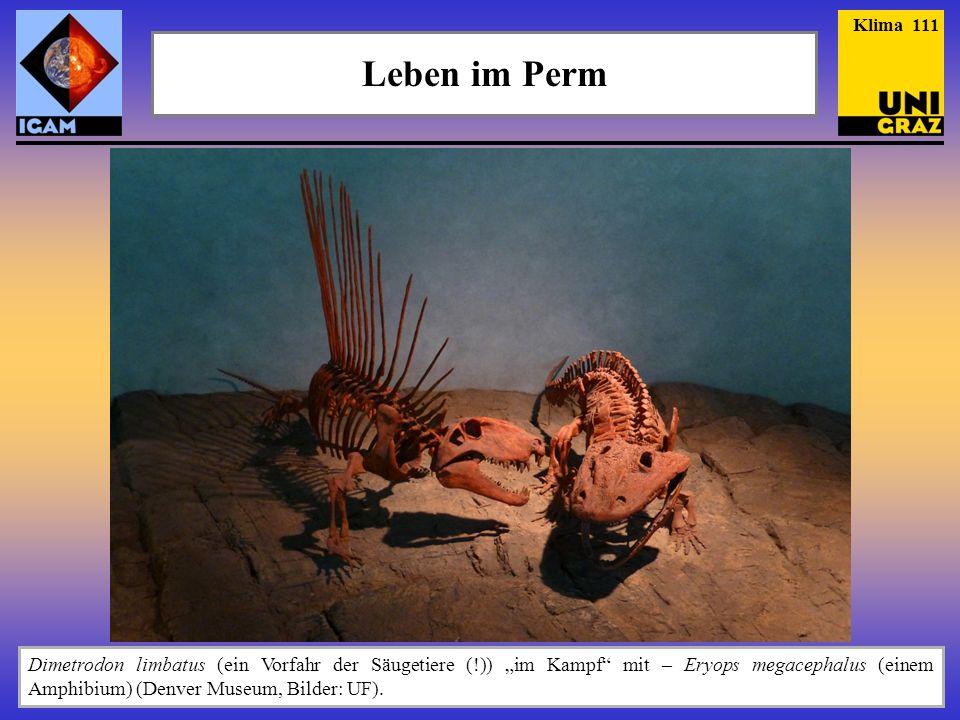 Klima 111 Leben im Perm. Zur Ergänzung noch zwei Bilder der indonesischen Quasten-flosser, die 1999 erstmals lebend beobachtet worden sind.