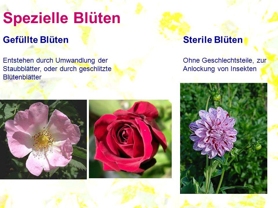Spezielle Blüten Gefüllte Blüten Sterile Blüten