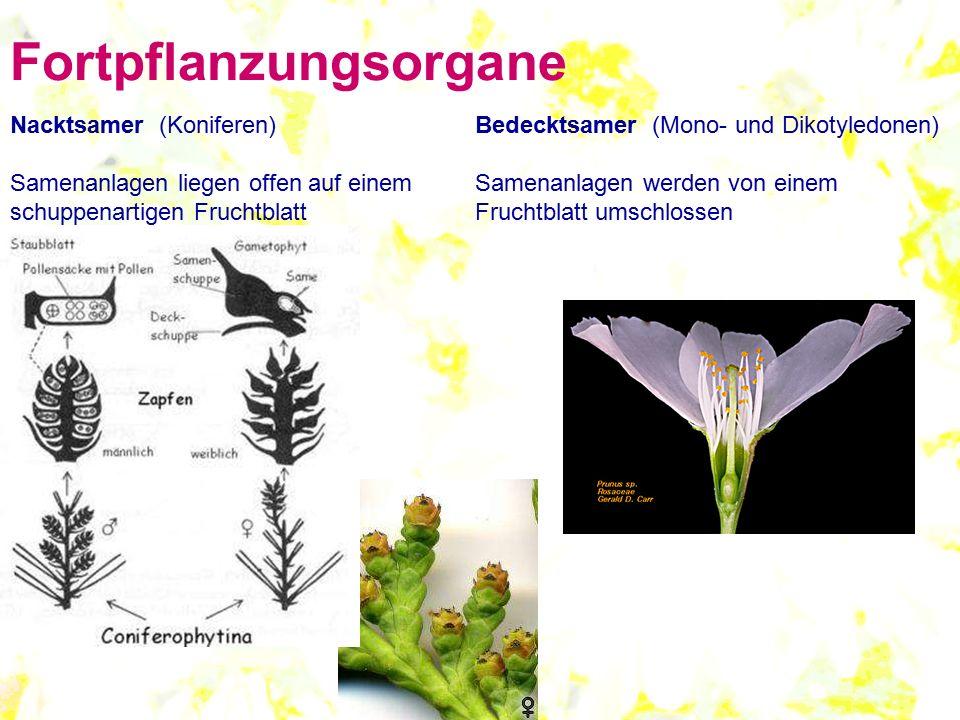 Fortpflanzungsorgane