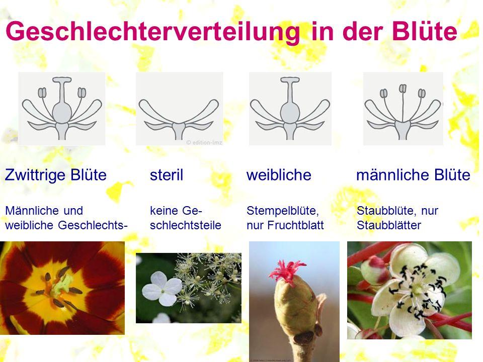 Geschlechterverteilung in der Blüte