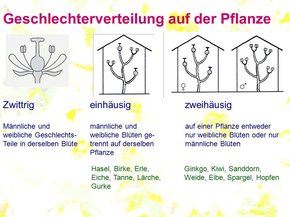 Geschlechterverteilung auf der Pflanze