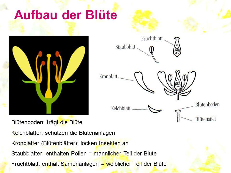 Aufbau Einer Tulpe : aufbau einer bl te aufbau einer blume bild blume oder bl ~ Lizthompson.info Haus und Dekorationen