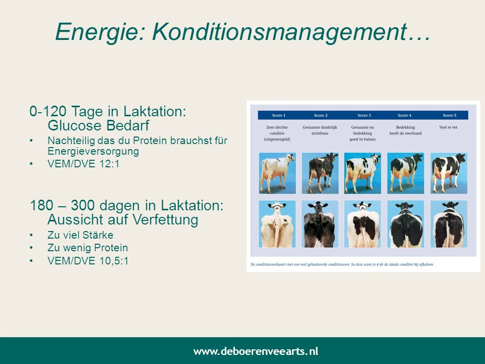 Energie: Konditionsmanagement…