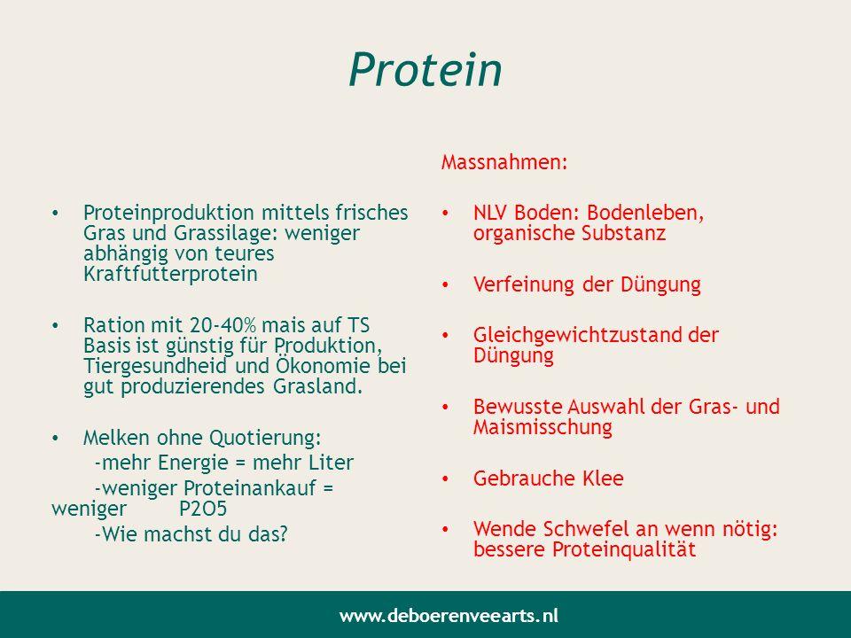 Protein Proteinproduktion mittels frisches Gras und Grassilage: weniger abhängig von teures Kraftfutterprotein.