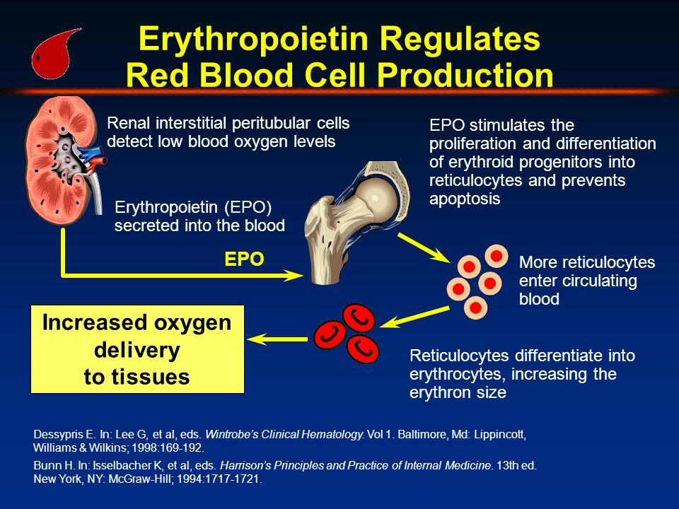 Erythropoietin Regulates Red Blood Cell Production