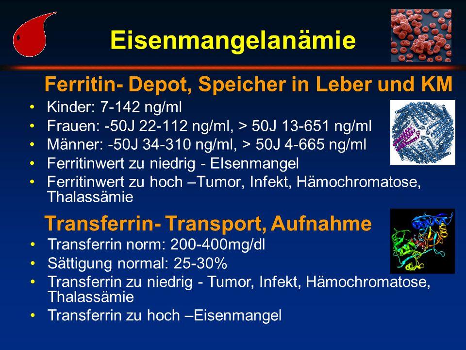 Eisenmangelanämie Ferritin- Depot, Speicher in Leber und KM