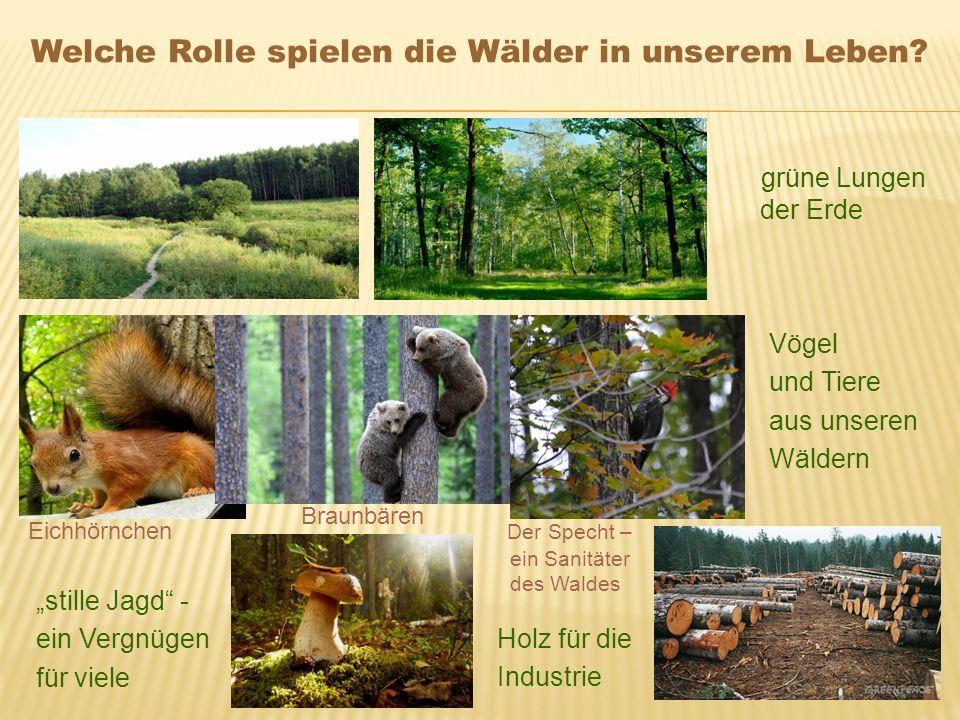 Welche Rolle spielen die Wälder in unserem Leben