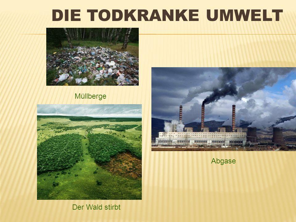 Die todkranke Umwelt Müllberge Abgase Der Wald stirbt