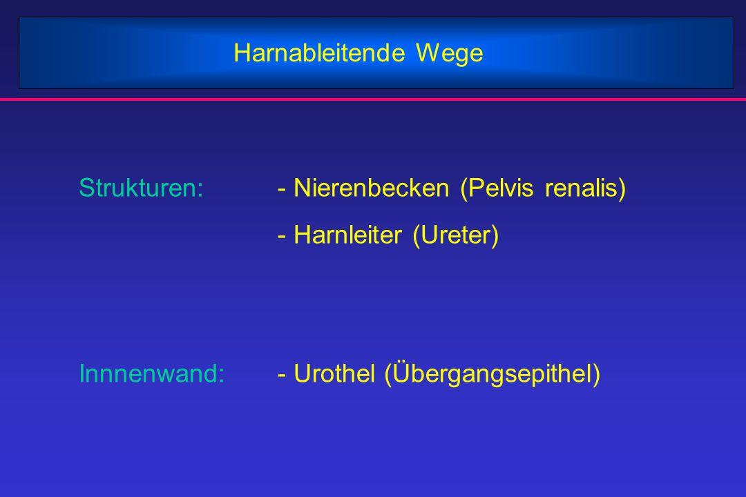 Harnableitende Wege Strukturen: - Nierenbecken (Pelvis renalis) - Harnleiter (Ureter) Innnenwand: - Urothel (Übergangsepithel)