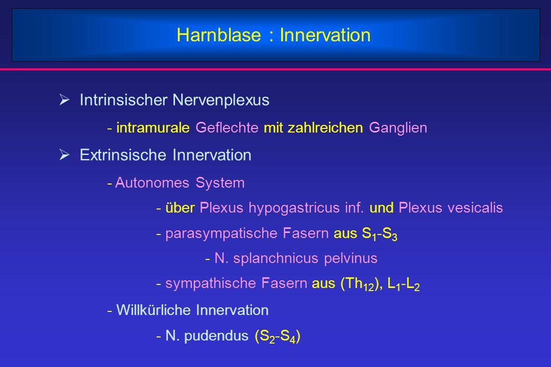 Harnblase : Innervation