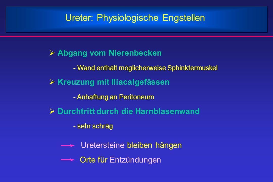 Ureter: Physiologische Engstellen