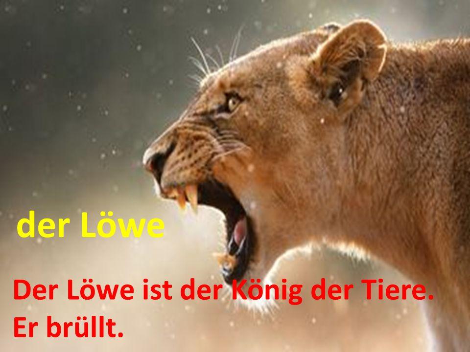 der Löwe Der Löwe ist der König der Tiere. Er brüllt.