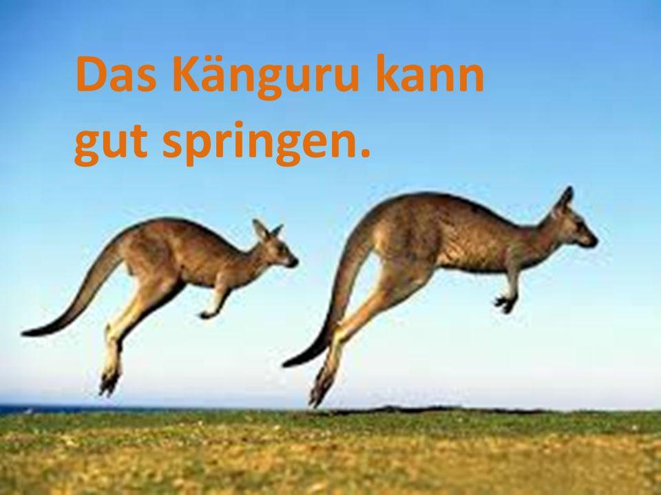 Das Känguru kann gut springen.