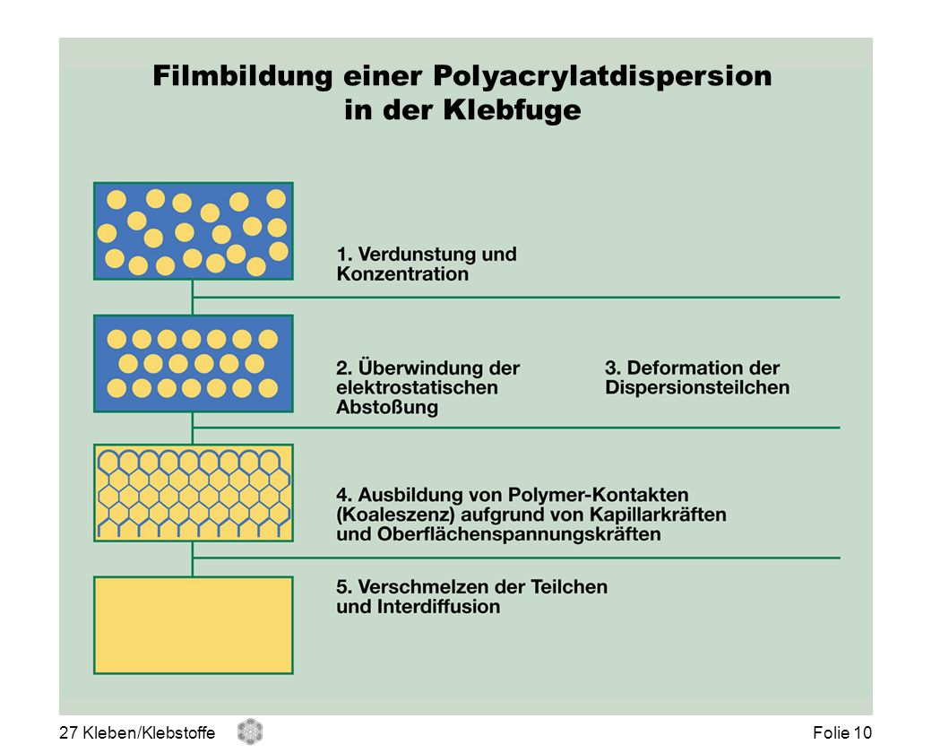 Filmbildung einer Polyacrylatdispersion