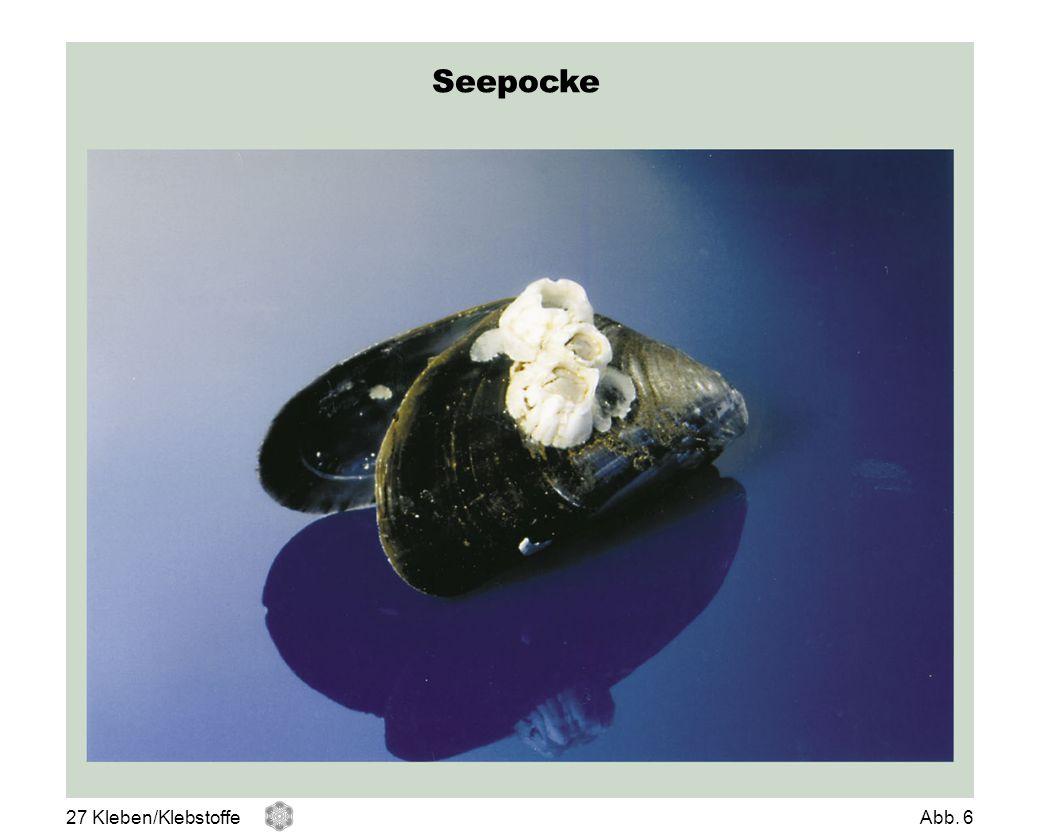 Seepocke Seepocke 27 Kleben/Klebstoffe Abb. 6