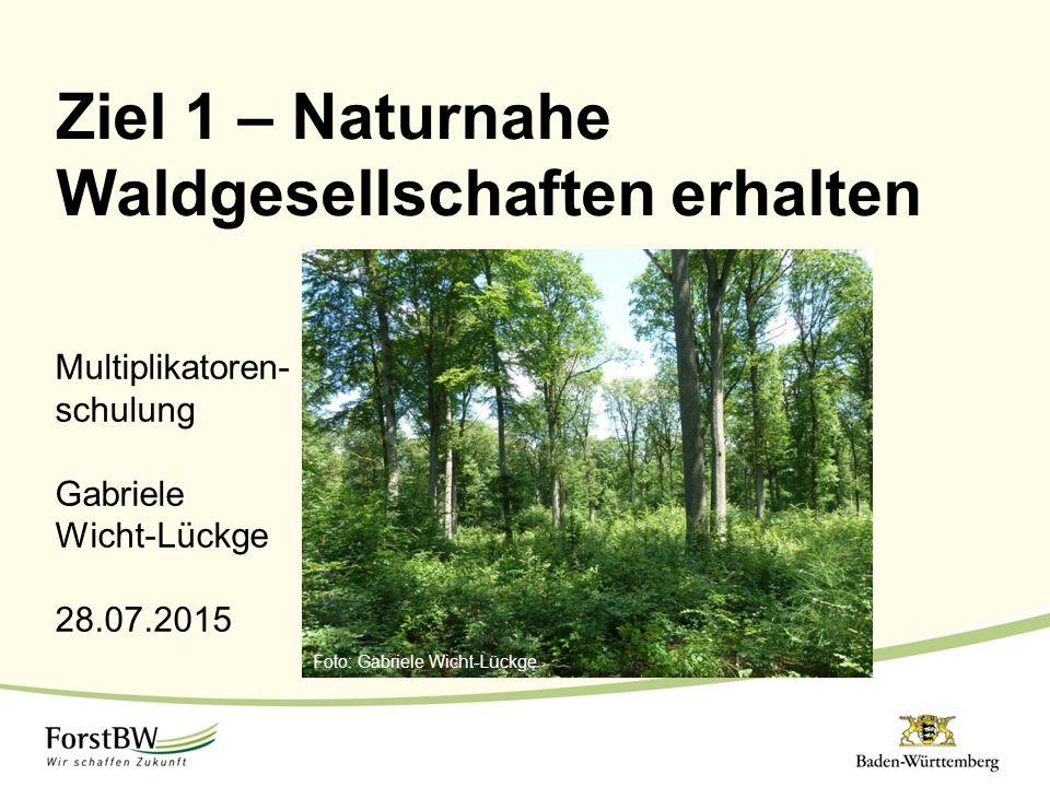 Ziel 1 – Naturnahe Waldgesellschaften erhalten