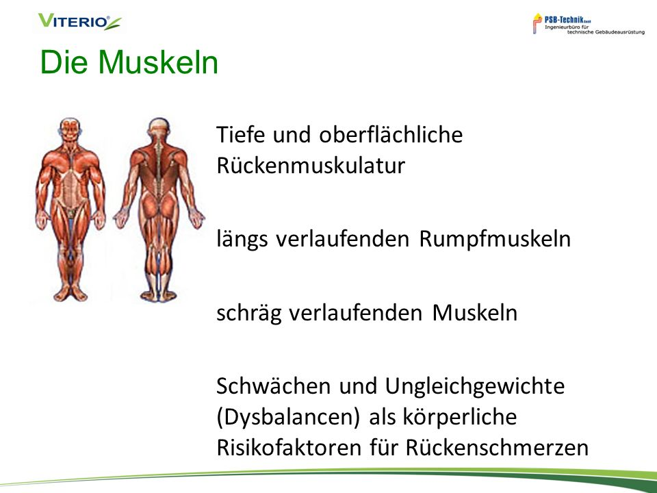Die Muskeln