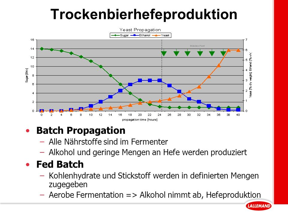 Trockenbierhefeproduktion