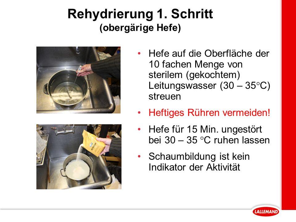 Rehydrierung 1. Schritt (obergärige Hefe)