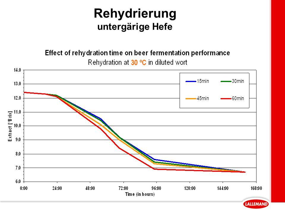 Rehydrierung untergärige Hefe