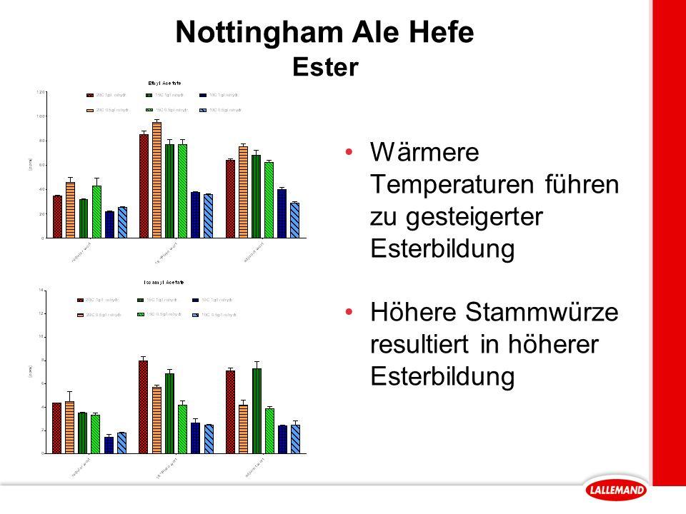 Nottingham Ale Hefe Ester