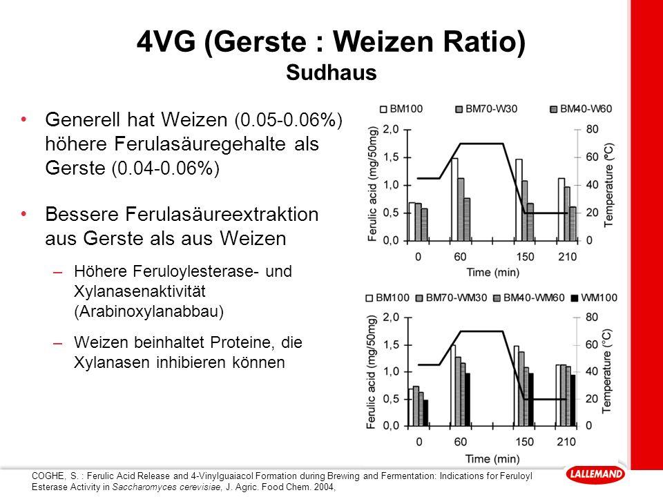4VG (Gerste : Weizen Ratio) Sudhaus
