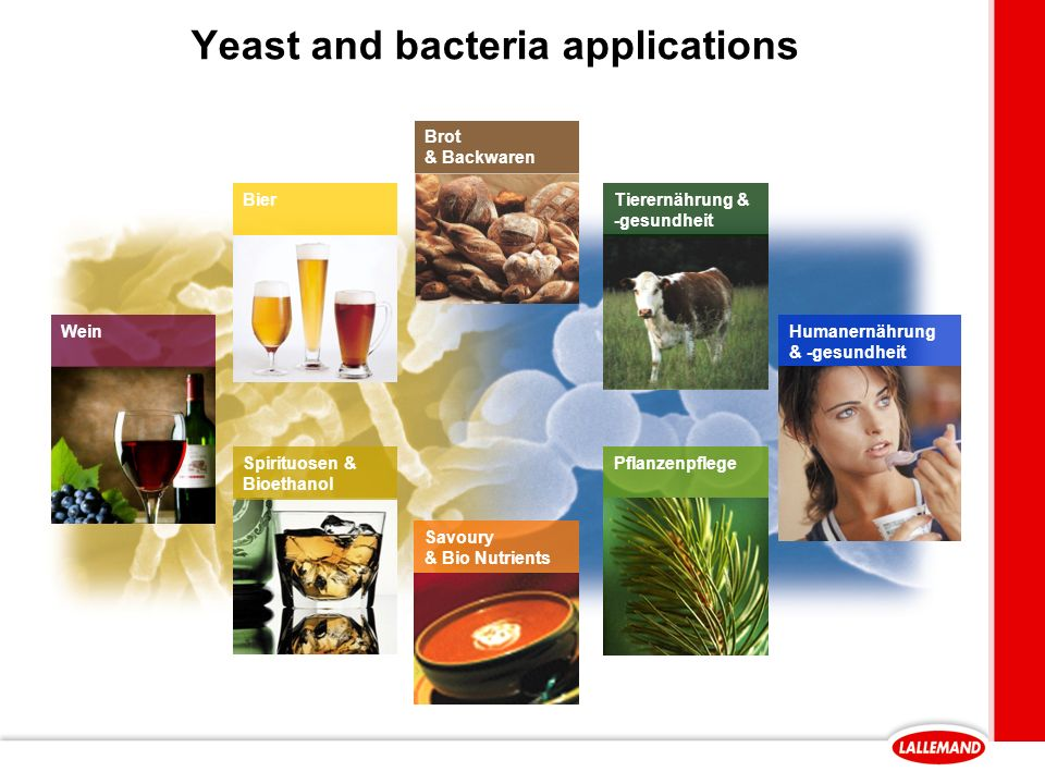 Yeast and bacteria applications