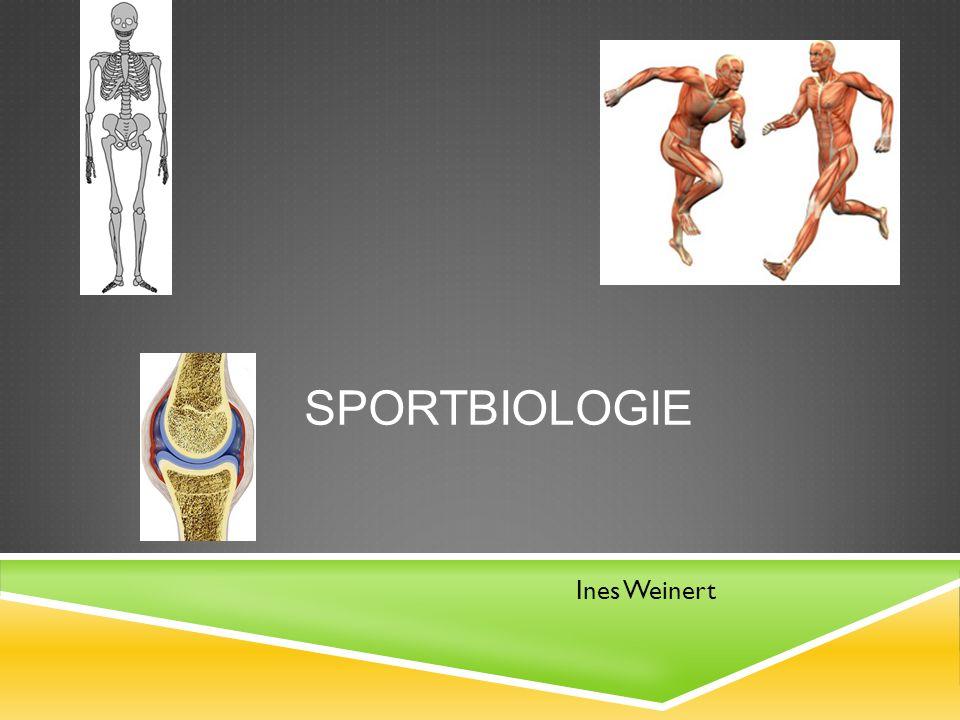Sportbiologie Ines Weinert