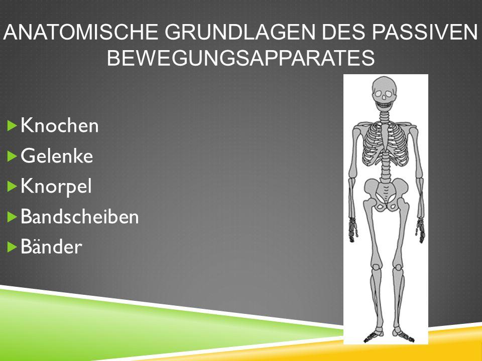 Anatomische Grundlagen des passiven Bewegungsapparates