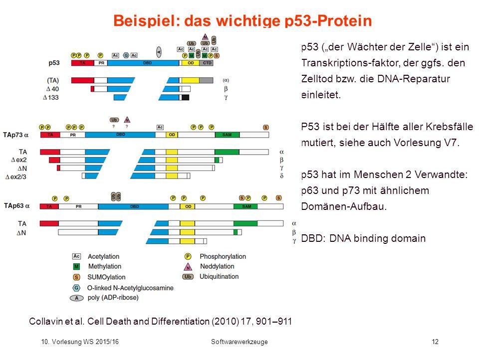 Beispiel: das wichtige p53-Protein