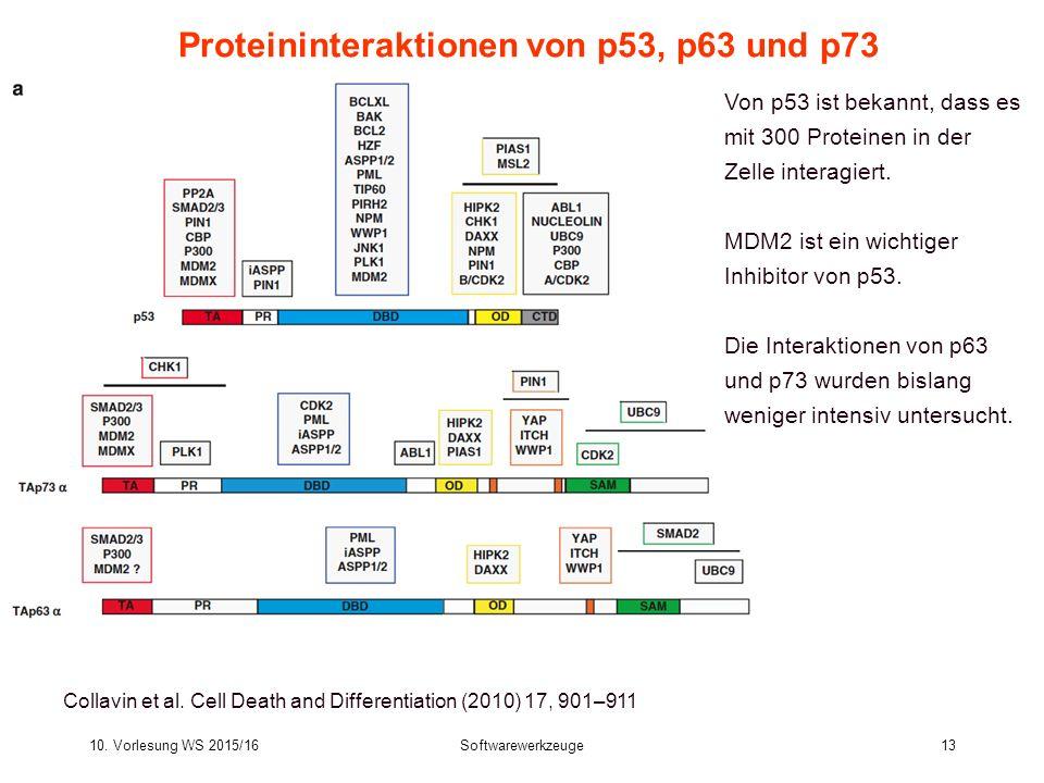 Proteininteraktionen von p53, p63 und p73