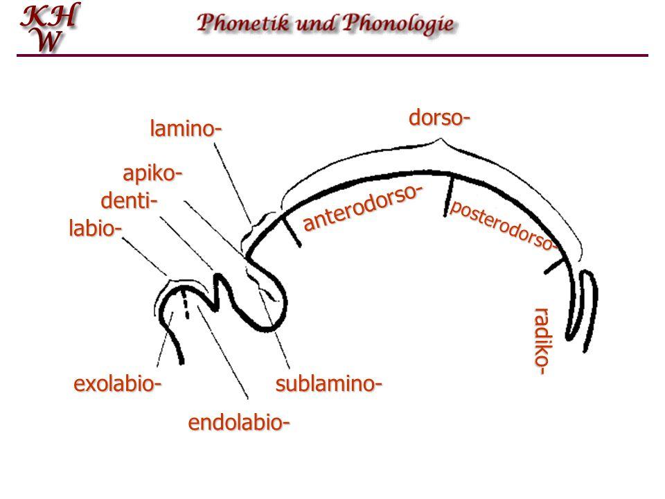 dorso- lamino- apiko- denti- anterodorso- labio- radiko- exolabio-