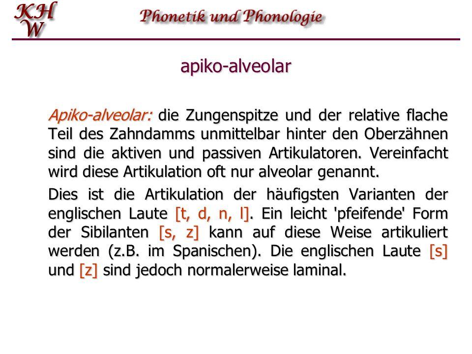 apiko-alveolar