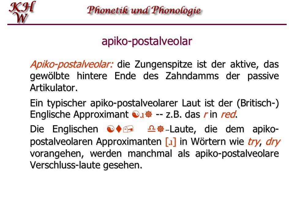 apiko-postalveolar Apiko-postalveolar: die Zungenspitze ist der aktive, das gewölbte hintere Ende des Zahndamms der passive Artikulator.
