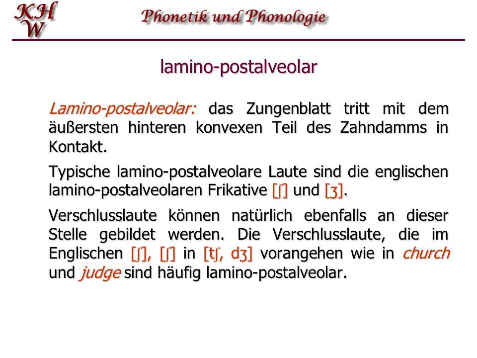lamino-postalveolar Lamino-postalveolar: das Zungenblatt tritt mit dem äußersten hinteren konvexen Teil des Zahndamms in Kontakt.