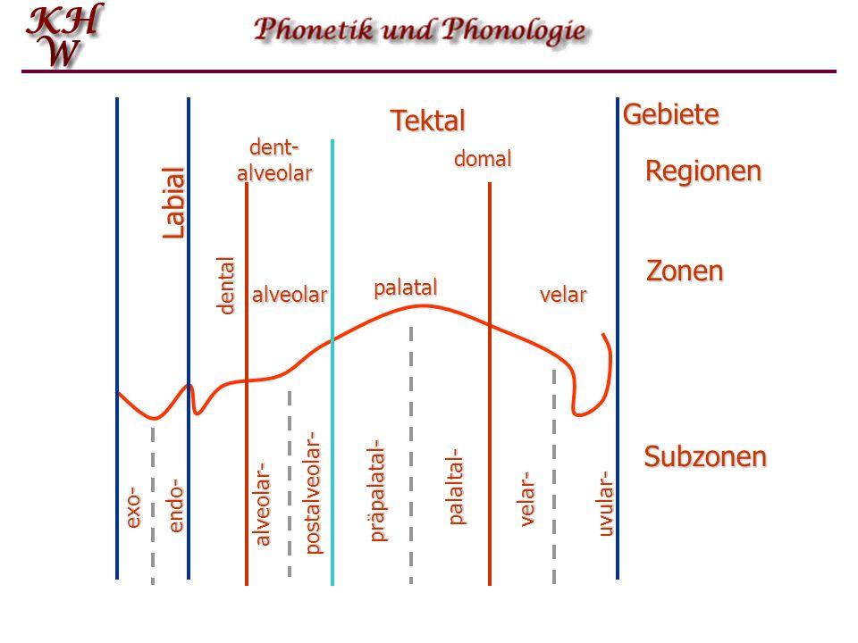 Gebiete Tektal Regionen Labial Zonen Subzonen dent- alveolar domal