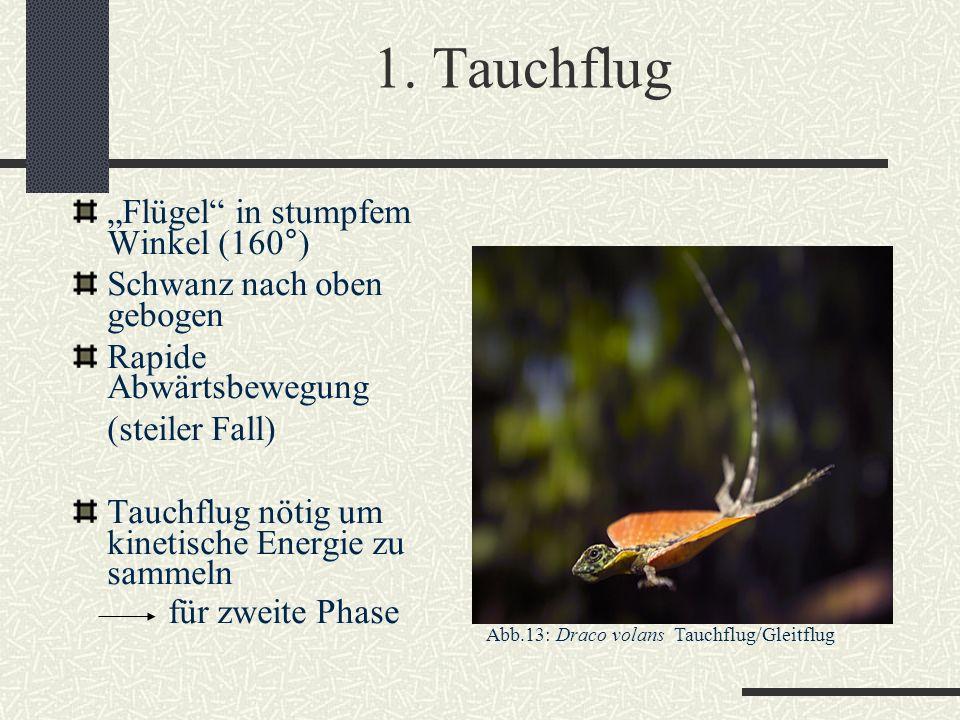 """1. Tauchflug """"Flügel in stumpfem Winkel (160°)"""