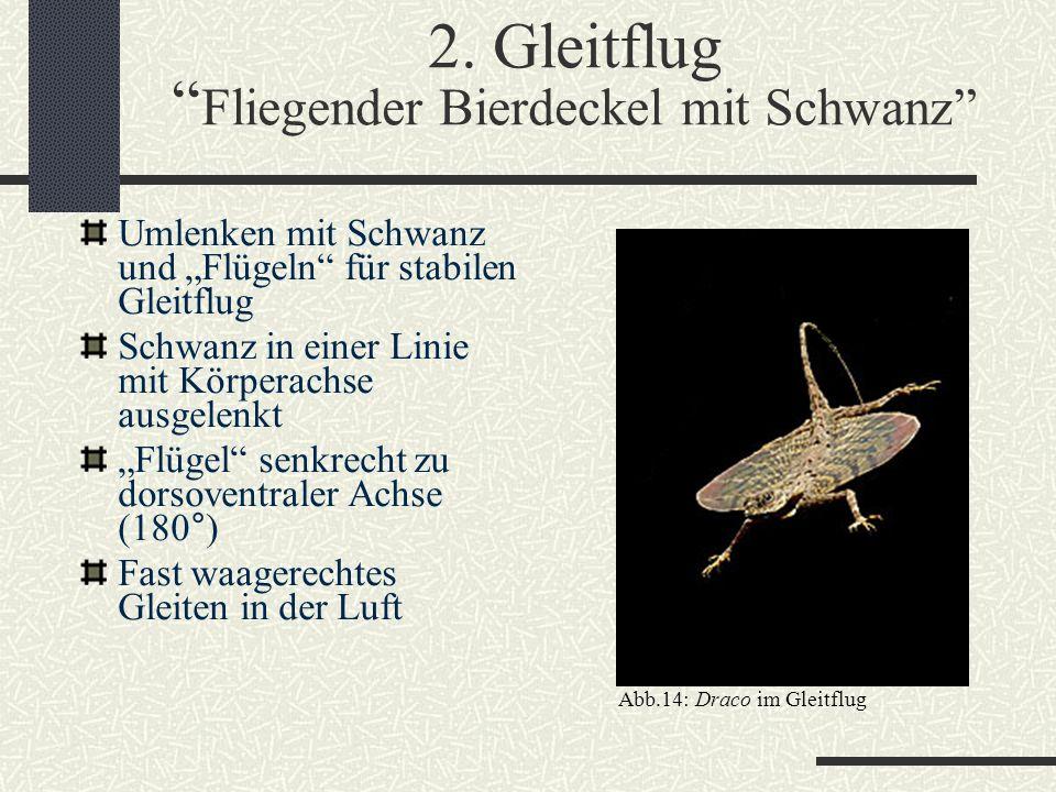 2. Gleitflug Fliegender Bierdeckel mit Schwanz