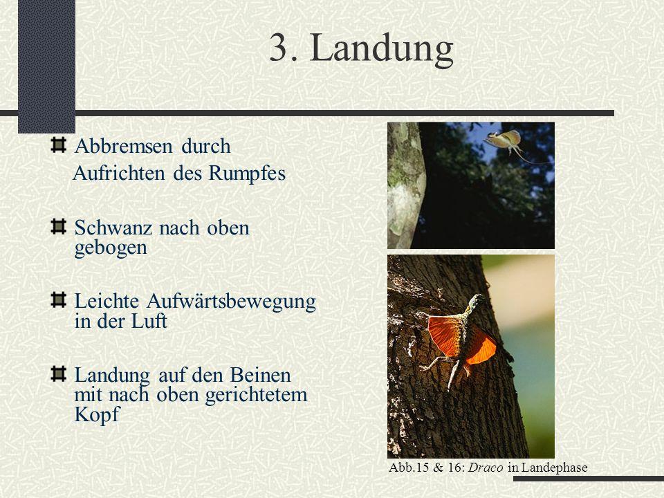 3. Landung Abbremsen durch Aufrichten des Rumpfes