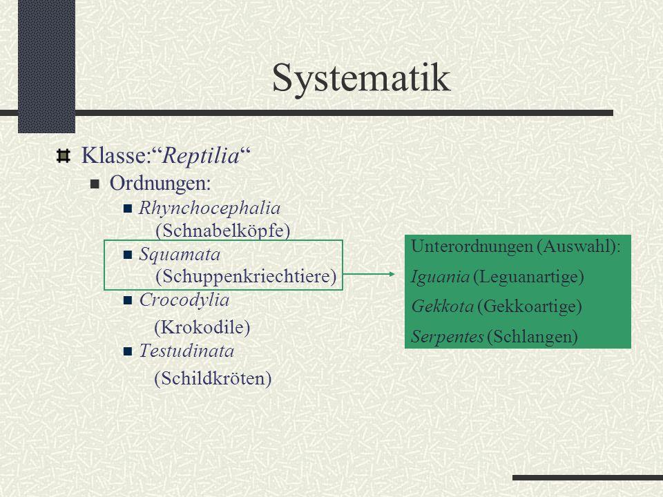 Systematik Klasse: Reptilia Ordnungen: Rhynchocephalia